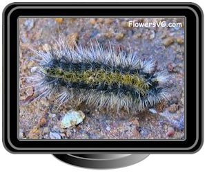 black white caterpillar