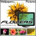 flower wallpapers and pictures