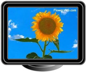 very large yellow sunflower with blue sky background